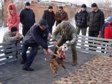 собачьи бои москва жестокое обращение с животными бизнес