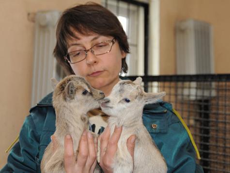 Московский зоопарк превратят в лекторий