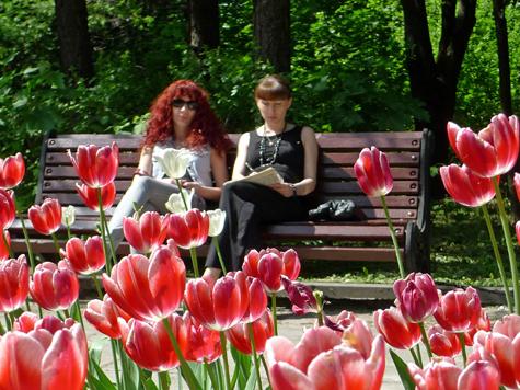 Парк Горького состроил розу