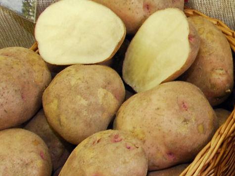 Картофель бьет ценовые рекорды