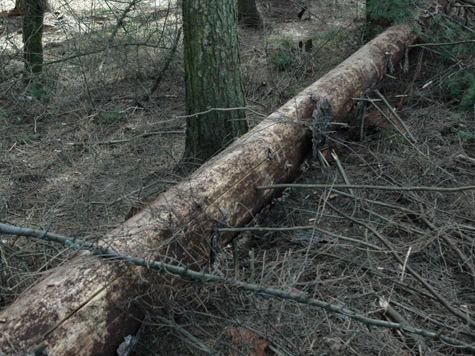 мособллес пожары лес жуки-короеды санитарная вырубка леса