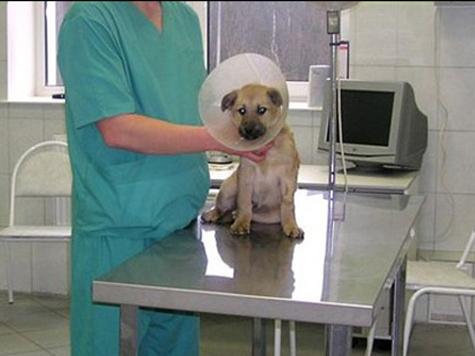 В «новой» Москве подарят прививки животным