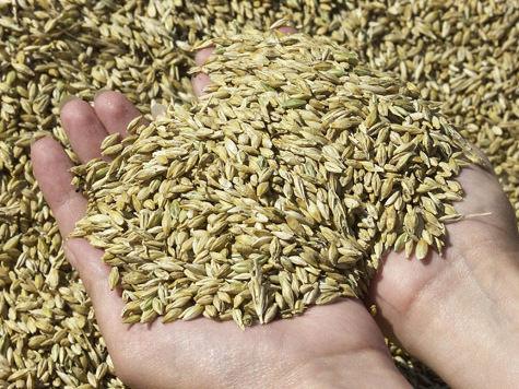 Правительство просчиталось с зерном