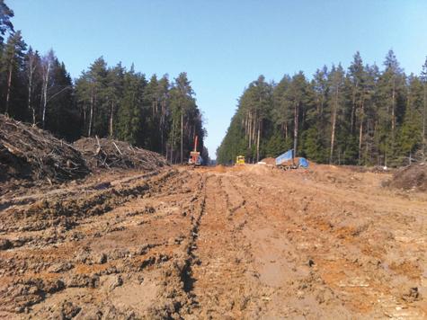 Рублевский лес рубят на прибыль