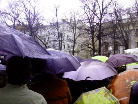 Культура с музыкой дождя