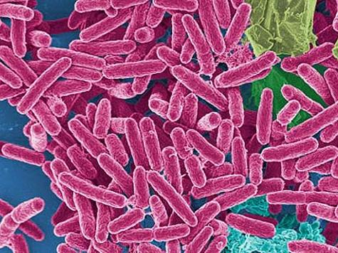 Космические бактерии в трюках подменят дублеры