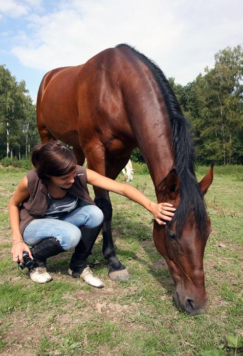 Новых лошадей для Кремля выберут с линейкой