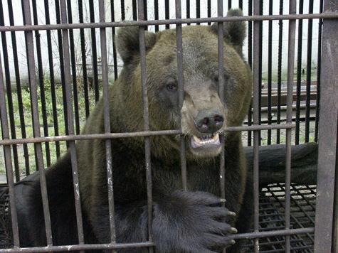 Медведям в зоопарке дадут биг-гамак