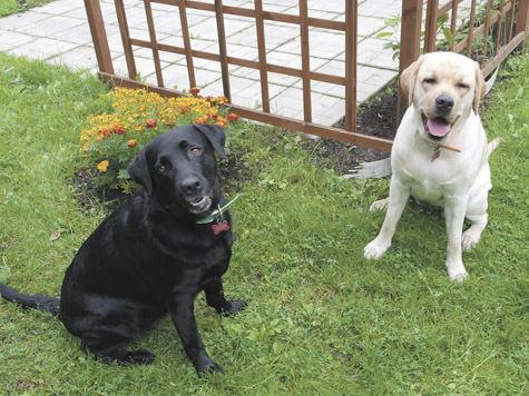 Догхантеры взялись за домашних собак