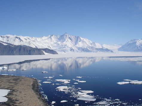 В Антарктике обнаружены леса