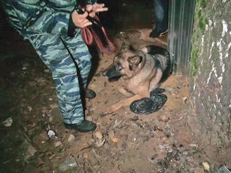 Полицейский Дина унюхала взрывчатку среди зелени