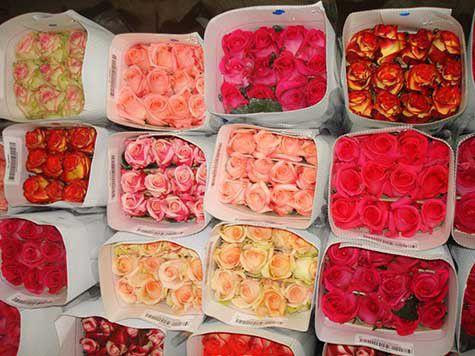Цветы оптом от первой биржи цветов BiFlorica