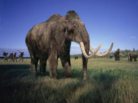 Ученые рассказали, как они будут населять Землю вымершими мамонтами