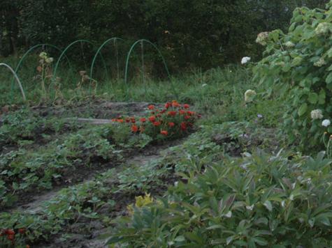 Маньяк устроил женское кладбище в огороде