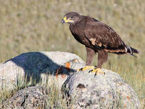 Почему Европу стали осаждать дикие животные и птицы