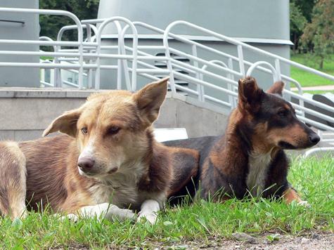 В новом парке найдут место для собак