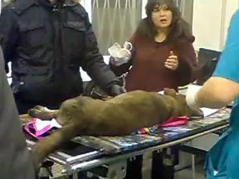 Собаку сбросили под поезд
