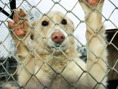 В Сочи будет создан питомник для животных.