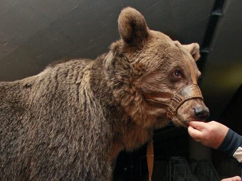 Весна подействовала на жителей Московского зоопарка убаюкивающе