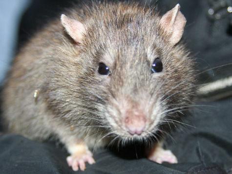 Не дом, а крысота!
