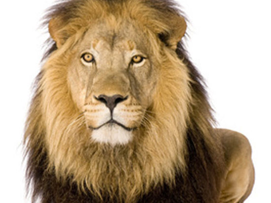 Голодные сирийцы съели льва