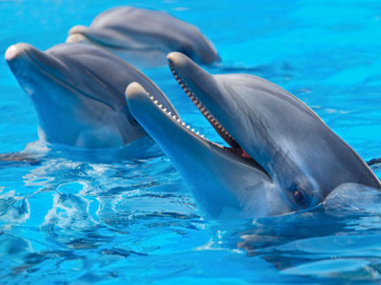Ученые позаимствовали у дельфинов звук для отпугивания акул