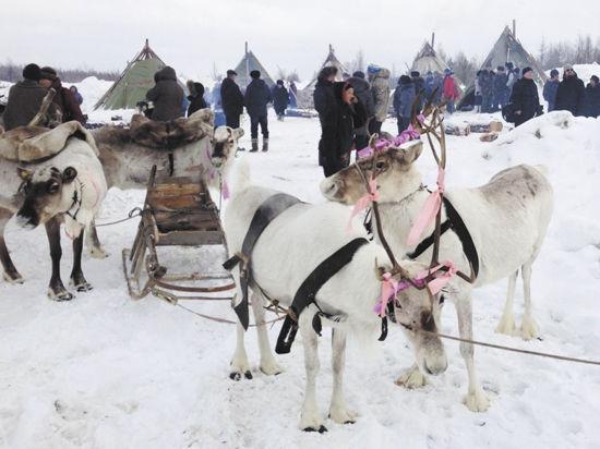 Чем живут российские эвенки: олень вместо бога и две программы телевидения