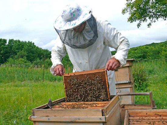 Пчеловодов обяжут знать, о чем жужжат их подопечные