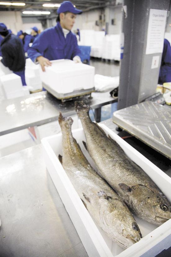 Рыбак дурака видит издалека