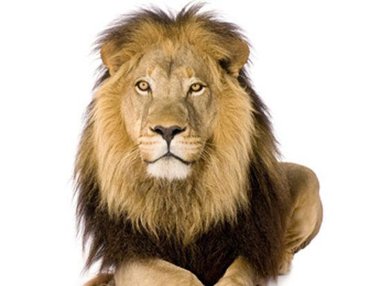 В Копенгагенском зоопарке прокомментировали убийство львов:
