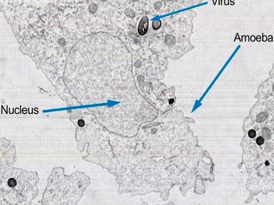 На Колыме в вечной мерзлоте найден крупнейший вирус в истории