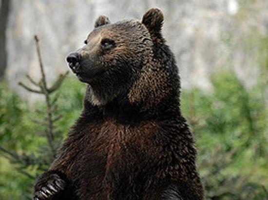 Шок в зоопарке Караганды: медвежонка на глазах детей скормили ягуарам