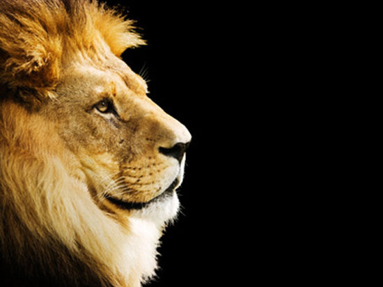 Не Копенгаген. Убийство львов — просто бизнес