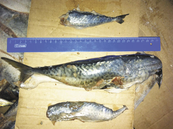 Мелкая рыба «заплыла» за решетку с подачи браконьеров?