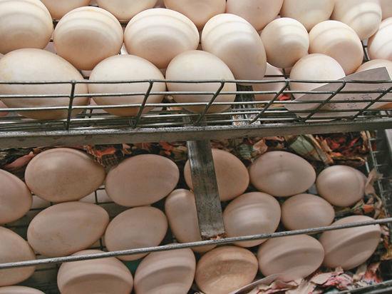 ФАС взялась за яйца