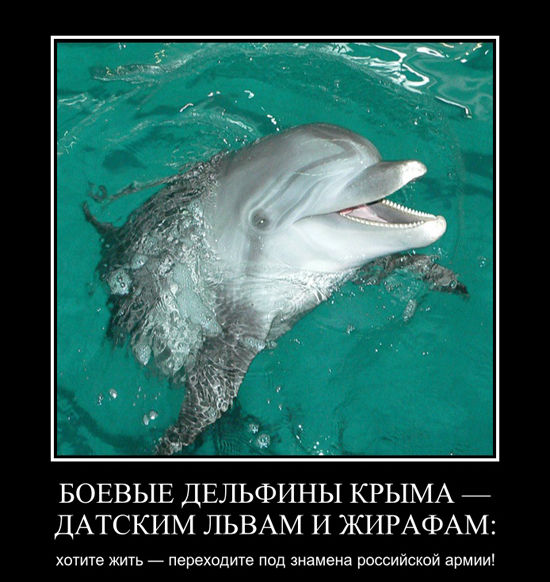 «У дельфина не раскрылся парашют». Тайны подготовки боевых крымских млекопитающих