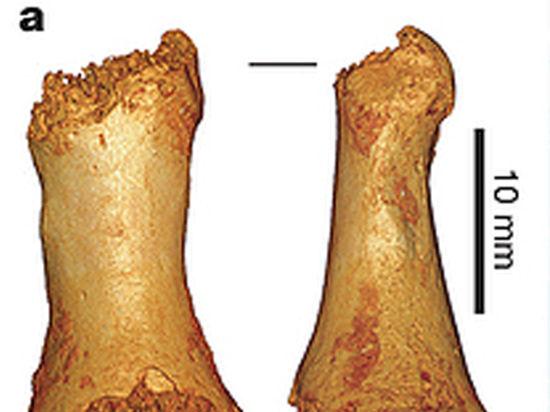 Ученые нашли общежитие неандертальцев и денисовцев