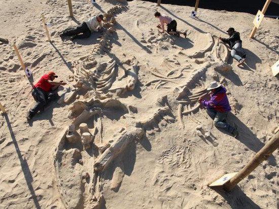 Раскрыта тайна смертей на Холме китов