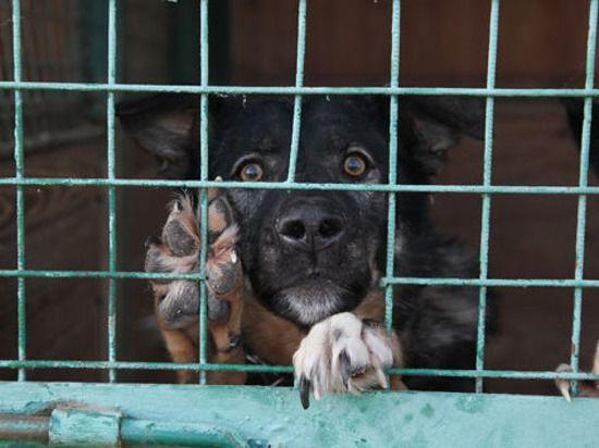 Подмосковный майор полиции похитил миллион, выделенный на корм для собак