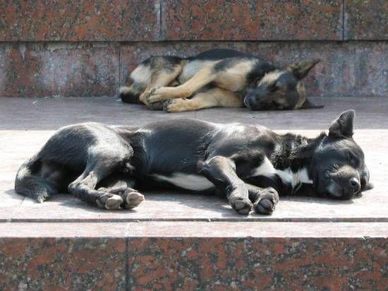 50 млн рублей на содержание и отлов бездомных животных потратят в этом году в Подмосковье