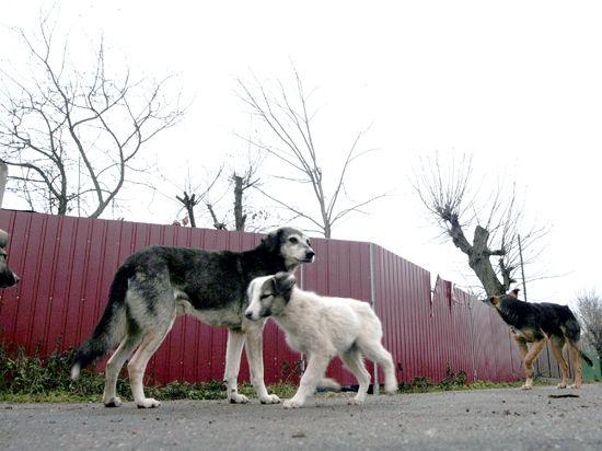 Коммунальщики изучат повадки бродячих псов