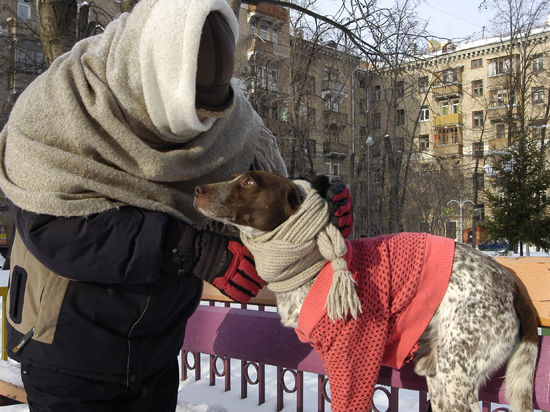 морозы бездомные животные помощь животным