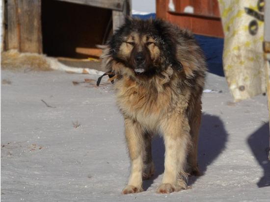 Собак с окровавленными мордами от мертвого ребенка отгоняли прохожие
