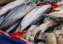 Медведев вернет российскую рыбу на прилавки