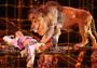 Всемирно известный цирк привез в Хабаровск более 300 животных.