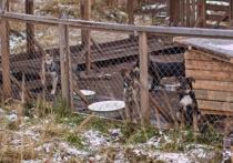 Бездомные животные в Петрозаводске переживут зиму в новом приюте