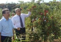 Шарип Шарипов: «Настало время сажать сады»