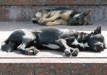В Москве вдвое уменьшилось количество случаев бешенства у животных