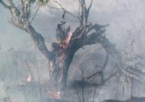 Загадки сгоревшего леса