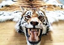 Заслуженного художника России будут судить за шкуры тигров